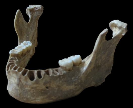 DNA taken from a 40,000-year-old modern human jawbone from the cave Peștera cu Oase in Romania reveals that this man had a Neanderthal ancestor as recently as four to six generations back.
