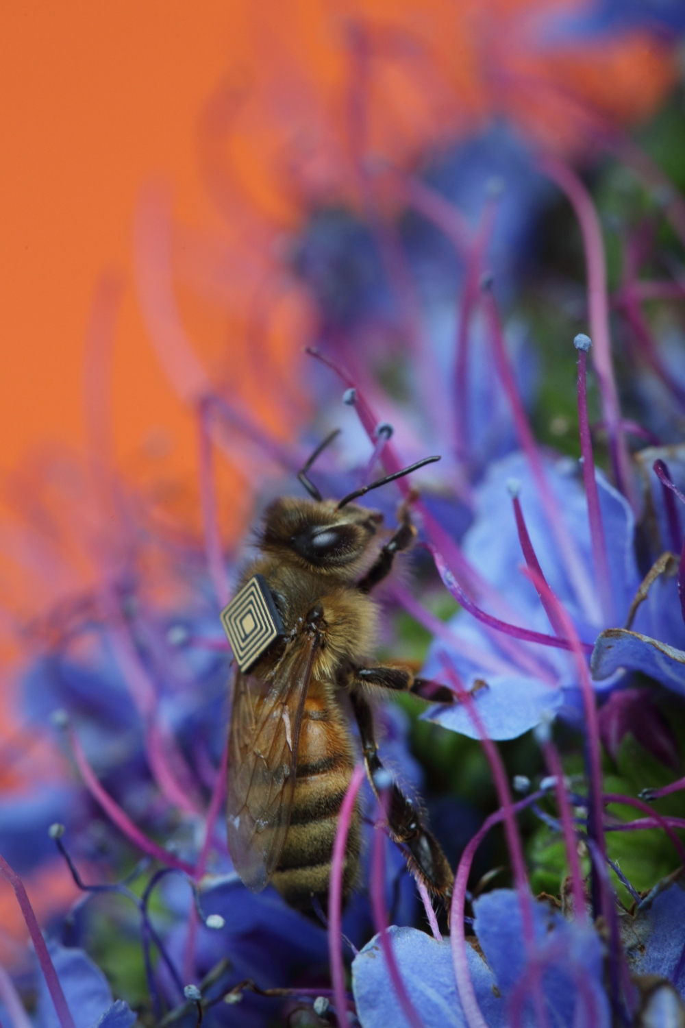 The Global Initiative for Honey Bee Health (GIHH) is an international alliance of researchers led by the CSIRO. In a world first, the GIHH will seek to address threats to honey bee health through a world-wide data collection exercise. © CSIRO