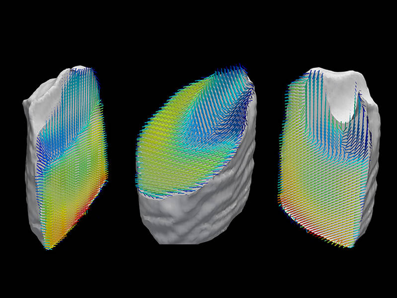 Representation of the orientation of collagen fibers within a tooth sample. The sample's three-dimensional nanostructure was computed from a large number of separate images recorded by X-ray scattering CT. (Image: Schaff et al. / Nature)