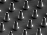 "Electron micrograph of the ""micro bed of nails"". The columns are around 8 micrometres high with around 7 micrometres between them. (Photo: Sorce B et al. Nature Communications 2015)"