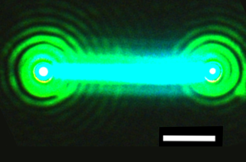 This nanowire, composed of cesium, lead and bromide (CsPbBr3), emits bright laser light after hit by a pulse from another laser source. The nanowire laser proved to be very stable, emitting laser light for over an hour. It also was demonstrated to be broadly tunable across green and blue wavelengths. The white line is a scale bar that measures 2 microns, or millionths of an inch. (Credit: Sam Eaton/UC Berkeley)