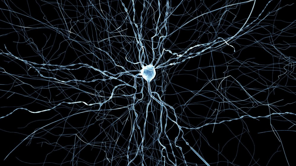 A virtual neuron from Blue Brain facility _EPFL
