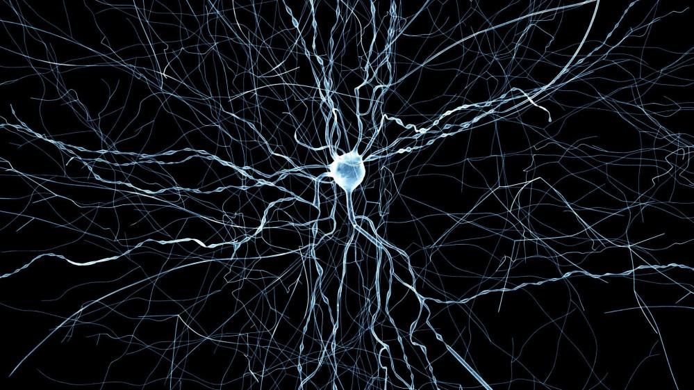 A virtual neuron from Blue Brain facility _EPFL