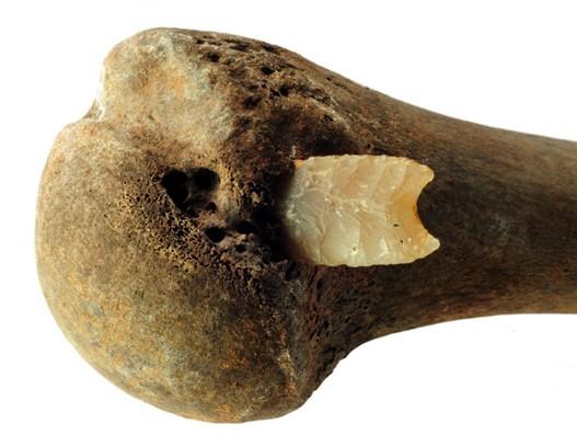 Η βυθισμένη αιχμή βέλους (πυριτόλιθο) στο οστό ωμοπλάτης, συνέγειρε τους αρχαιολόγους, όσον αφορά στις βίαιες συγκρούσεις της πεδιάδας. Πηγή: Κρατική Υπηρεσία για την Διατήρηση Πολιτισμού & Πολιτιστικής Κληρονομιάς_ Μεκλεμβούργου - Δυτικής Πομερανίας _Τμήμα αρχαιολογίας_ S. Suhr