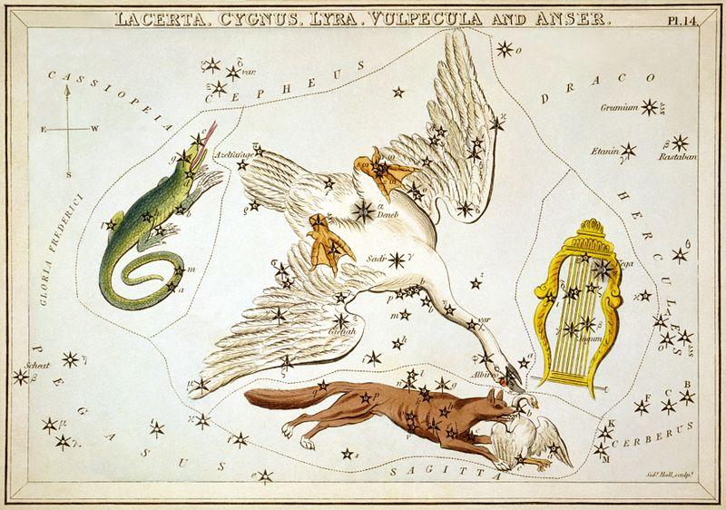 Ο Κύκνος στην αγκαλιά της Σαύρας, της Αλώπεκος (ον. Αλώπηξ) και της Λύρας Cygnus as depicted in Urania's Mirror, a set of constellation cards published in London c.1825. Surrounding it are Lacerta, Vulpecula and Lyra. wikipedia URL [https://en.wikipedia.org/wiki/Cygnus_(constellation)]