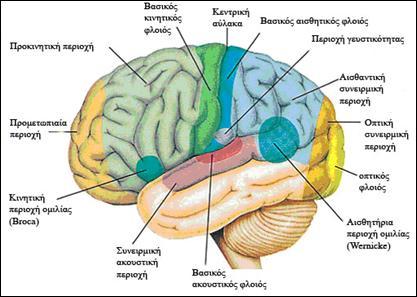 anatomiaEgkefalou