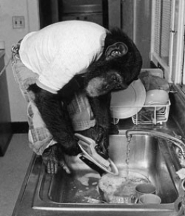 Nim Chimpsky (November 19, 1973 – March 10, 2000) was a chimpanzee who was the subject of an extended study of animal language acquisition (codenamed 6.001) at Columbia University, led by Herbert S. Terrace; the linguistic analysis was led by the psycholinguist Thomas Bever. (wikipedia)