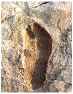 Ίχνη βάδισης από το Laetoli, τα οποία αποδίδονται στον αυστρολοπίθηκο afarensis
