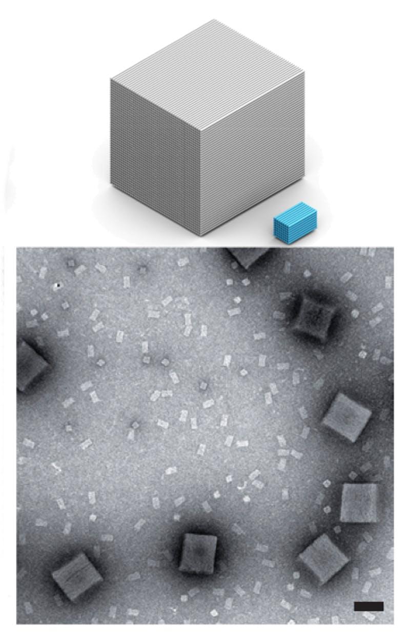 DNA-Bricks-comparision.jpg