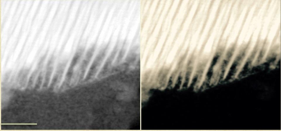 Martian_meteorite_0.jpg