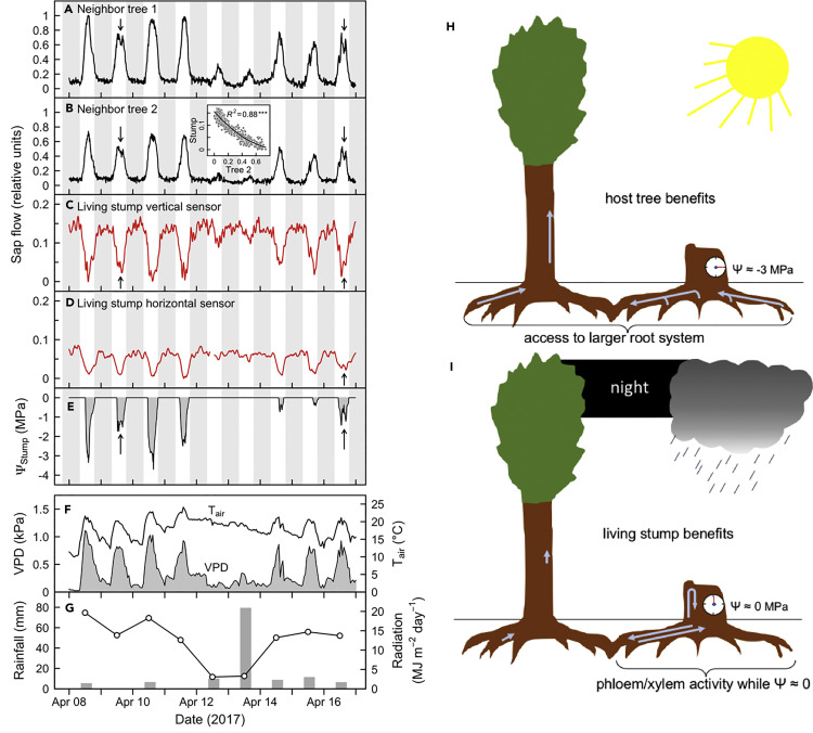 Επιστήμη δημιουργίας άνθρακα-14 dating